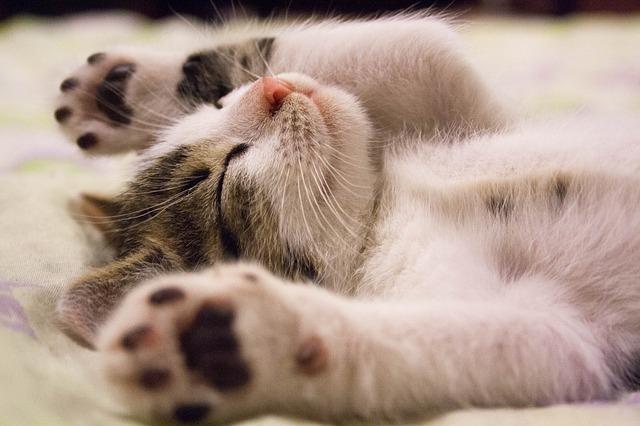 看護師の夜勤明けの睡眠で気を付ける5つのこと